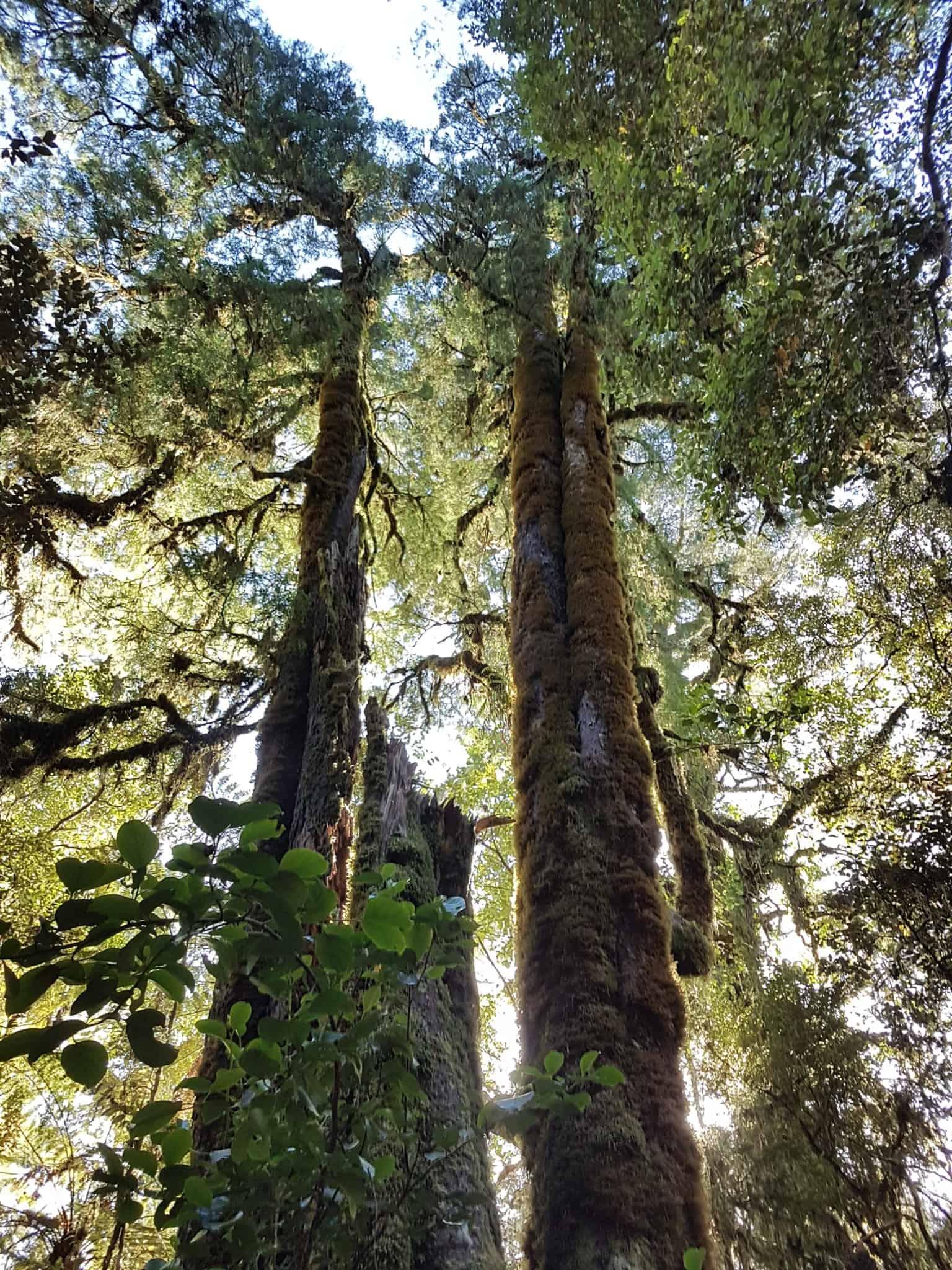 Nouvelle-Zélande, un levé de soleil féerique sur le lac Matheson ☀️ 19