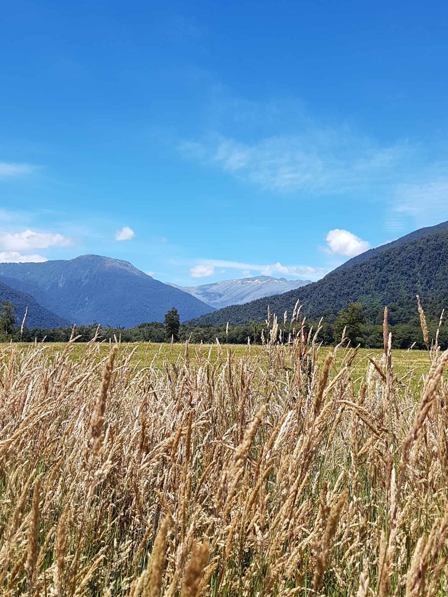 Nouvelle-Zélande, un levé de soleil féerique sur le lac Matheson ☀️ 26