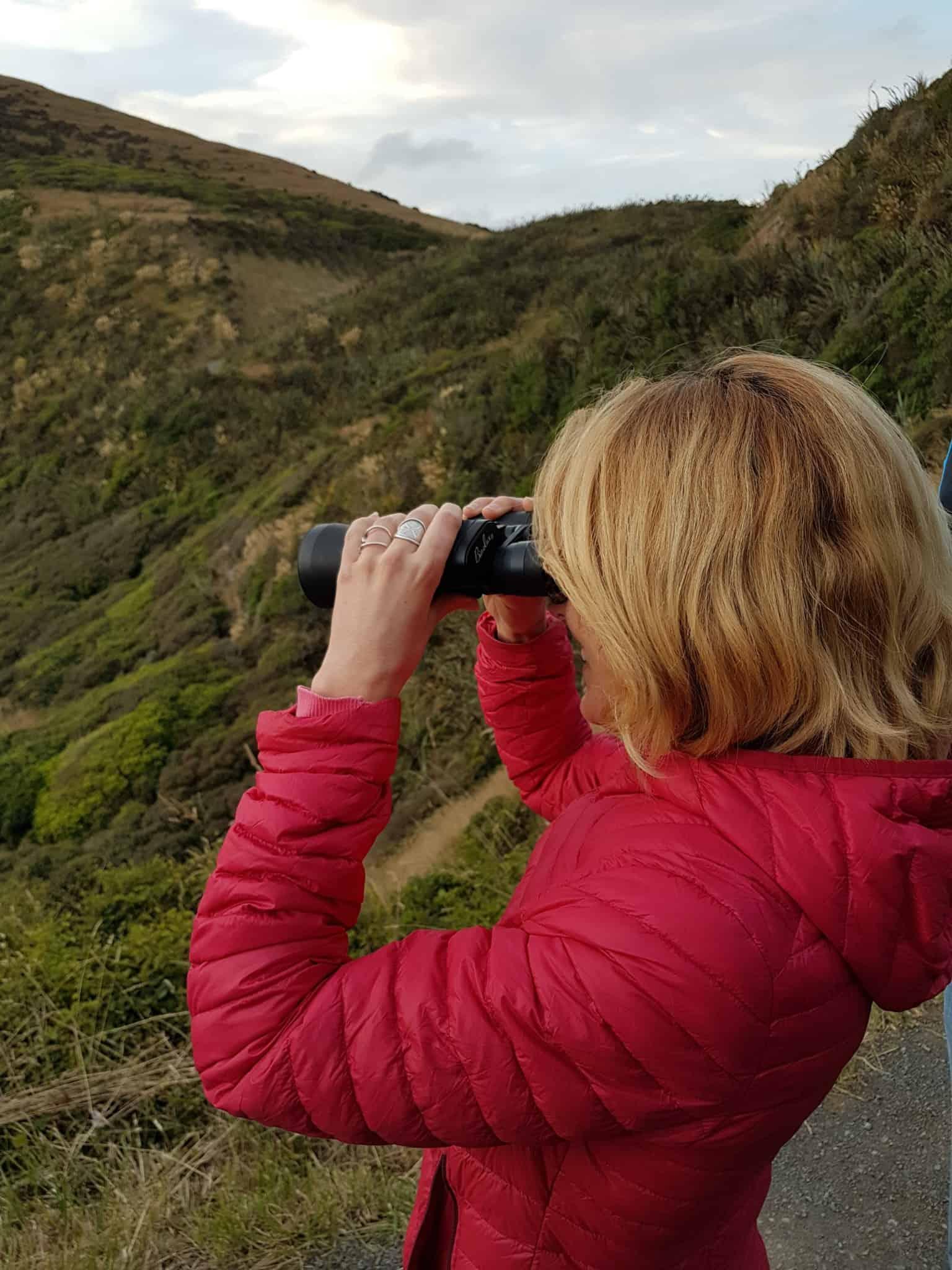 Nouvelle-Zélande, rencontre avec les pingouins aux yeux jaunes 🐧 14