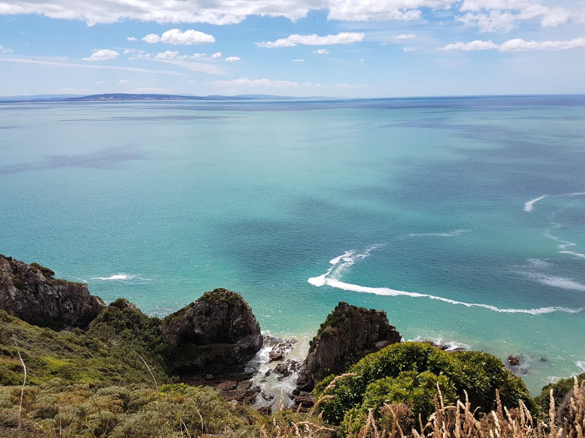 Nouvelle-Zélande, rencontre avec les pingouins aux yeux jaunes 🐧 17
