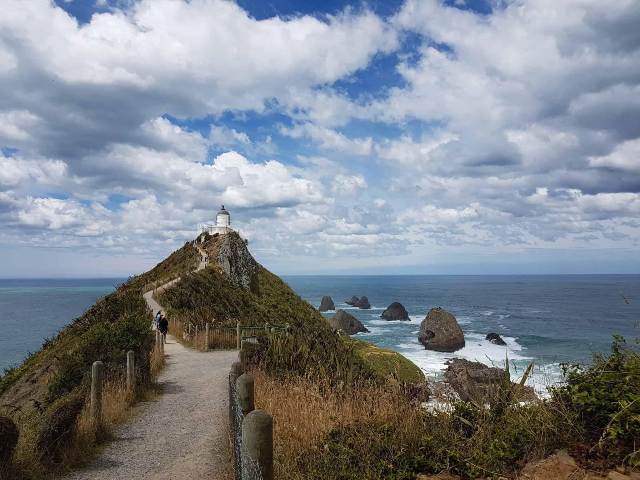 Nouvelle-Zélande, rencontre avec les pingouins aux yeux jaunes 🐧 18