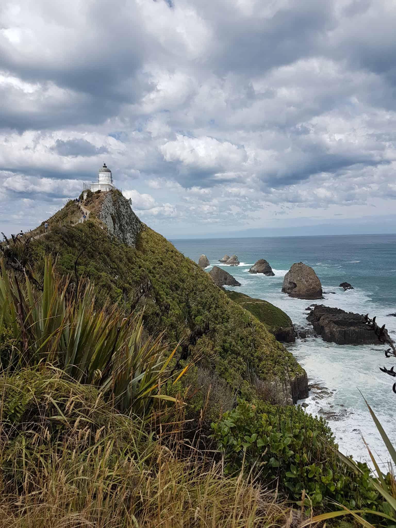Nouvelle-Zélande, rencontre avec les pingouins aux yeux jaunes 🐧 20