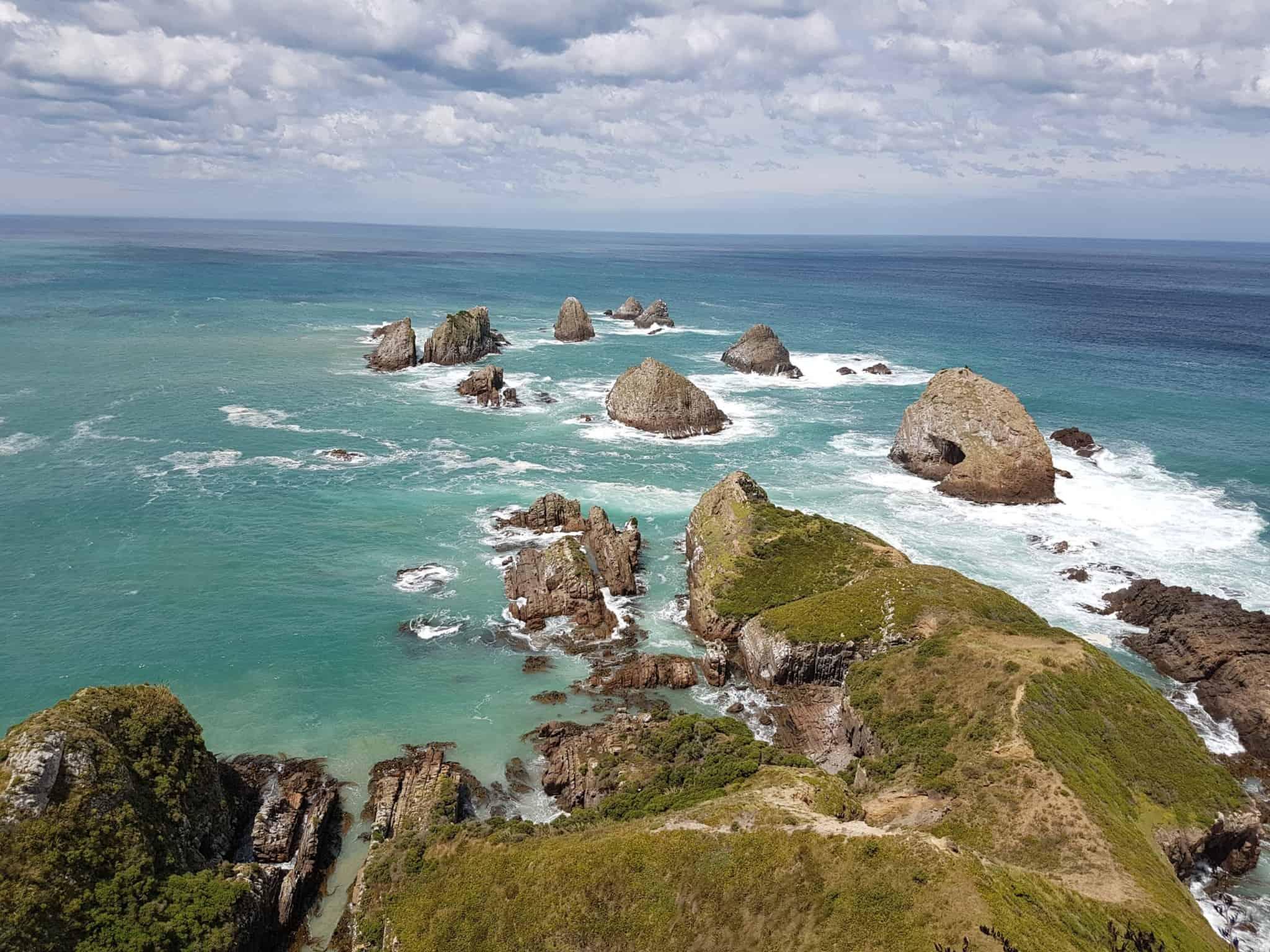 Nouvelle-Zélande, rencontre avec les pingouins aux yeux jaunes 🐧 21