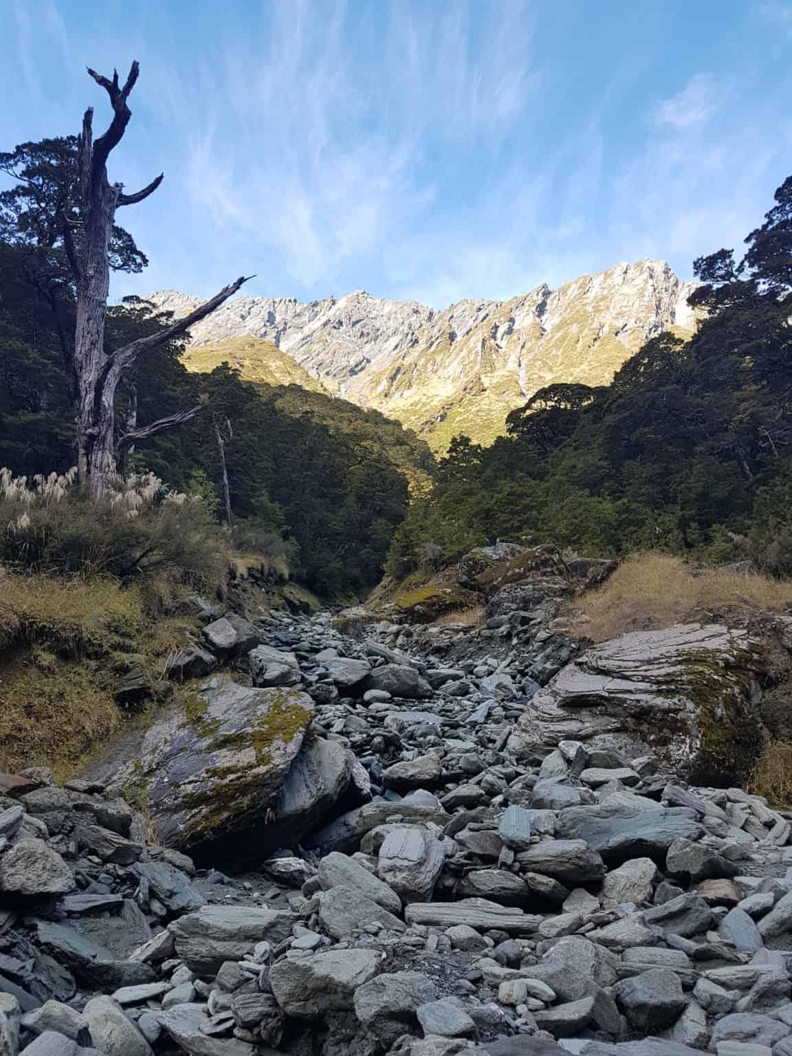 Nouvelle-Zélande, randonnée vers le Rob Roy Glacier et son sommet enneigé ❄ 19
