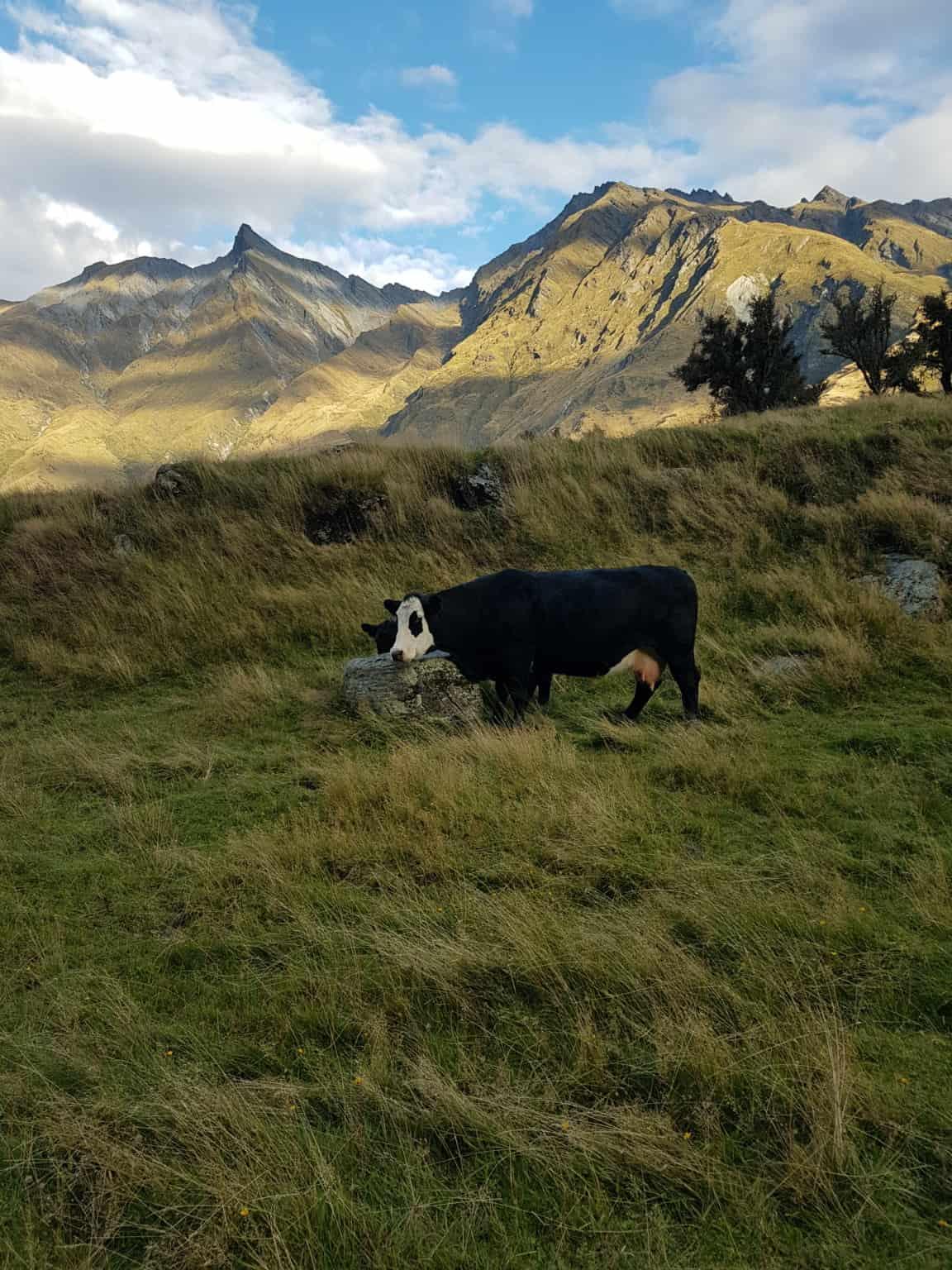 Nouvelle-Zélande, randonnée vers le Rob Roy Glacier et son sommet enneigé ❄ 26